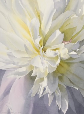 White Peony - size 25in x 18in - price $275 unframed / $450 framed