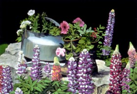Boots, Kettle and Lupine - size 14in x 21in - sold