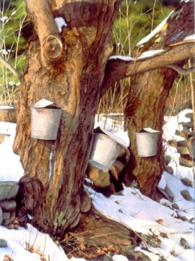 Harlow's Buckets