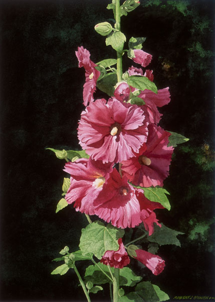 Hollyhocks in Forest Green - 19 x 11.5in - $175 / $300