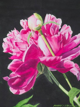 Peony and Bud - size 16in x 12in - sold