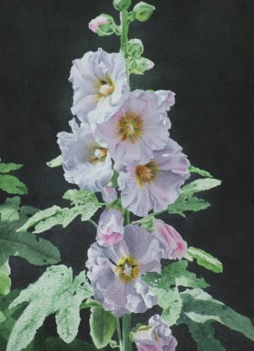 Hollyhock Blossoms - size 14in x 10in - sold