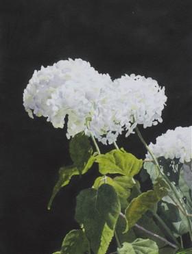 White Hydrangea - size - 15in x 11in