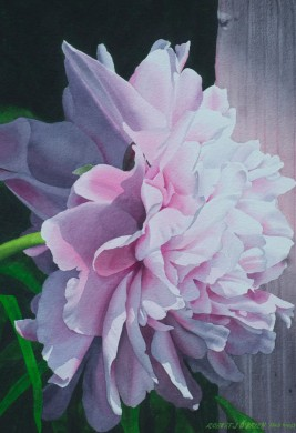 Reflected Peony Light - size 21 x 14.5in - sold