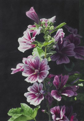 Rose Mallow - size - 15in x 11in