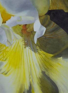 Yellow Bearded Iris - size 21 x 15in - price $2200