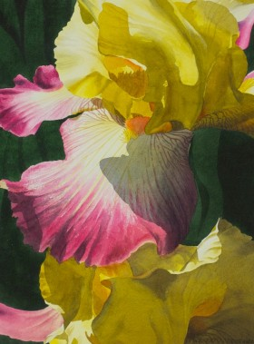 Crimson and Gold Iris - size 22in x 16in