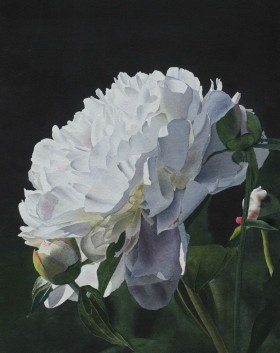 Evening Peony - size 21in x 16in - price $2300