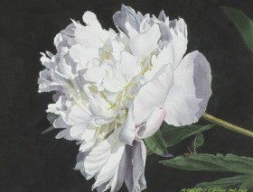White Peony in Afternoon Light - size - 14in x 17.5in