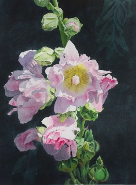 Pink and Yellow Hollyhocks - size 18in x 13in (image)