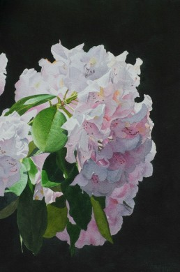 White Rhododendron - size - 22in x 15in