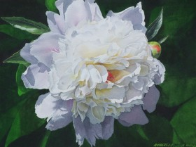 White Peony with Bud - size 15in x 20in (image)