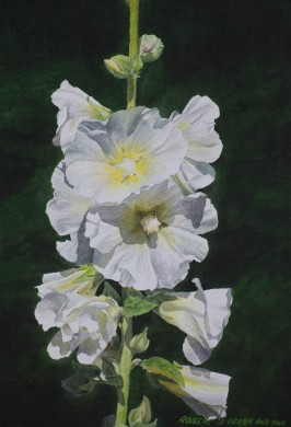 White Hollyhocks - size 14 x 10in (image) - sold