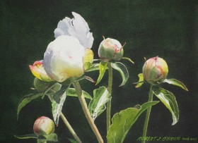 Emerging Buds - size 10in x 14in - $850