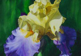 Thrillseeker Iris image size 14.5 x 21in.